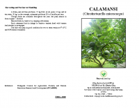 CALAMANSI PRODUCTION