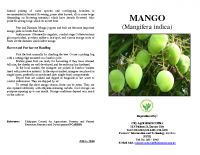 MANGO PRODUCTION