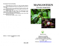 MANGOSTEEN PRODUCTION