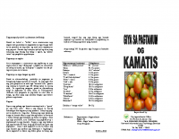 TOMATO (KAMATIS) PRODUCTION