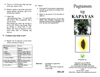 PAPAYA (KAPAYAS) PRODUCTION