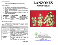 LANZONES PRODUCTION
